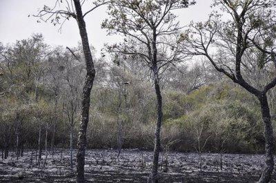 """Bahía Negra: """"el incendio no afectó la fauna"""""""