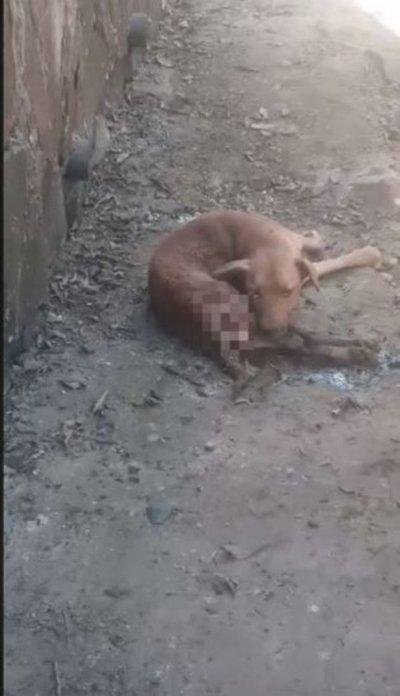 Enterraron vivo a un perro: lo rescataron, pero no aguantó