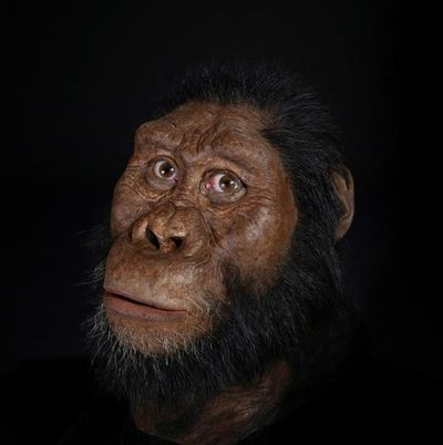 Encuentran el cráneo de un Australopithecus Anamensis, coetáneo de 'Lucy'