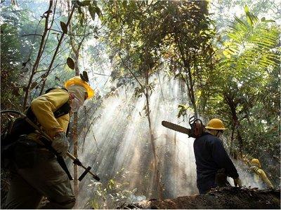 Brasil prohíbe uso de fuego para preparar siembra en Amazonía