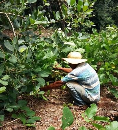 Productores de yerba mate denuncian que fueron engañados por el gobierno