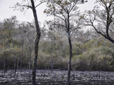 Suman 61.000 hectáreas calcinadas en incendio del Chaco paraguayo