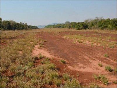Piden investigar cultivos ilegales y deforestación en áreas protegidas