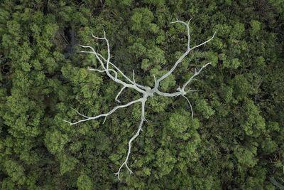 """Descubren que los árboles  """"aprenden""""  a adaptarse al cambio climático"""