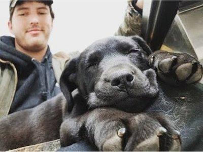 Adoptó a un perrito sordo y le enseñó lenguaje de señas
