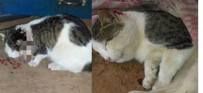 Kiko el gato que salvó a su dueña de ser mordida por una serpiente venenosa