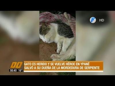 Gato héroe: Salvó a su dueña de una víbora venenosa