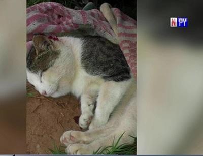 Gato que salvó a su dueña de una serpiente no aguantó heridas y murió