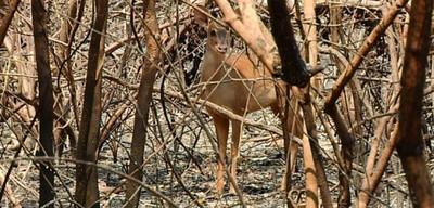 Animales en peligro de extinción fueron afectados por incendio forestal