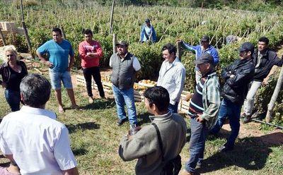 Quieren industrializar tomate en Cnel. Oviedo