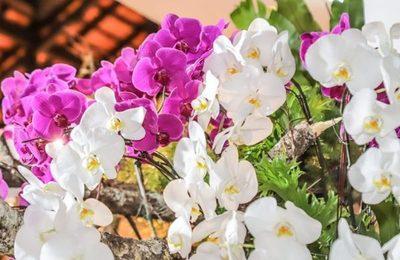 Empresa taiwanesa productora de orquídeas se instala este mes en Paraguay
