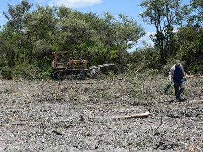 Desmonta 3.000 hectáreas y le multan con G. 1.600 millones