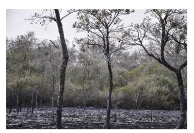 Arduo trabajo para contener nuevos focos de incendio en el Chaco
