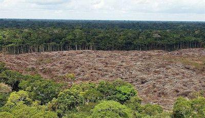 Deforestación en la Amazonía brasileña saltó un 222 % en agosto
