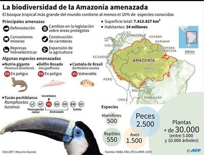 Bachelet alerta del catastrófico impacto para humanidad de fuego en Amazonía