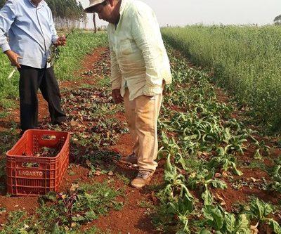 Sequía provoca pérdidas en el campo