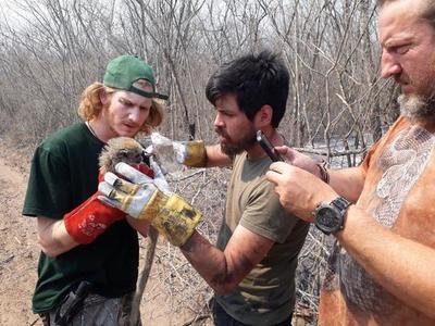 Proponen trabajar en reintroducción de crías en zonas afectadas por incendio