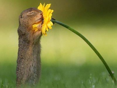 La tierna foto de una ardilla oliendo una flor con los ojos cerrados se vuelve viral