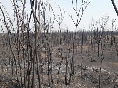 Poca presencia de organizaciones ambientalistas en el Chaco tras incendio