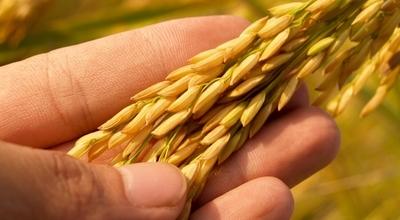 Harán congreso internacional dirigido a profesionales del rubro de agronegocios