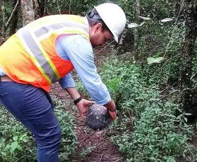 "Construirán ""pasafaunas"" para animales silvestres en nuevos asfaltados del Chaco"