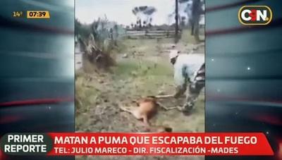 Hombre mata a golpes a puma que huyó de incendio