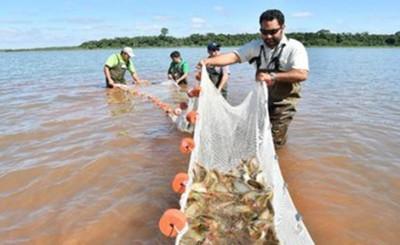 Itaipu registra nuevo récord en producción de peces