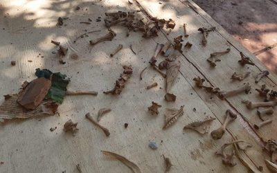 Invasores hallan más restos óseos