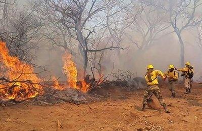 WWF pide declaración de emergencia nacional ante incendios
