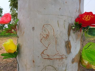 Figura de la Virgen aparece en un árbol en Loreto