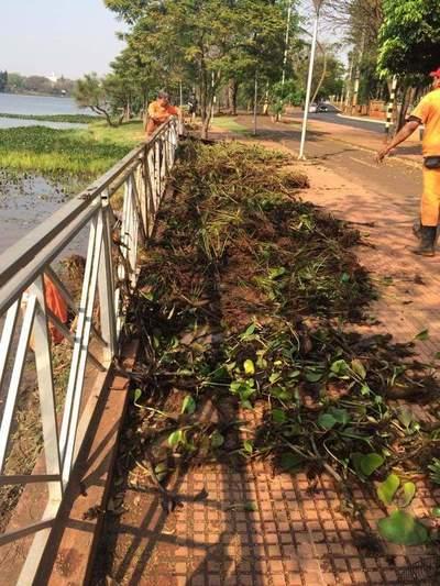 Basura sigue llegando al Lago a través del arroyo Amambay