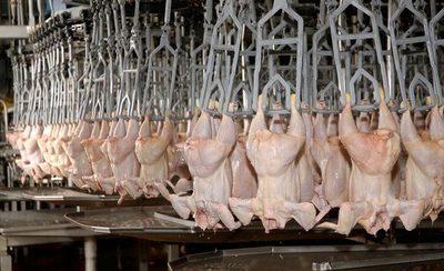 Sector avícola pide redoblar la lucha anticontrabando