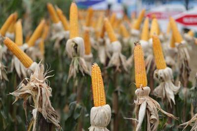 Gremio de pequeños productores agrícolas acompañan decisiones del Ejecutivo en el área