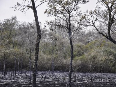 Fiscalía investiga a dos estancias de Bahía Negra por incendios
