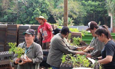 Itaipú ofrece plantines de especies nativas al público para incentivar la reforestación