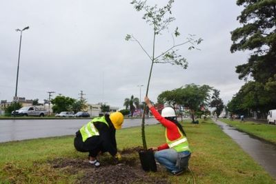 ATP realizará una plantación masiva de árboles en el día de la Primavera