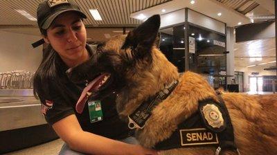 Ala, el can de la Senad, se retira tras nueve años de servicios y será condecorada