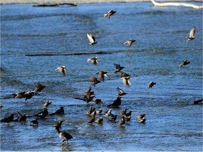EEUU y Canadá perdieron un 29% de sus pájaros en los últimos 50 años
