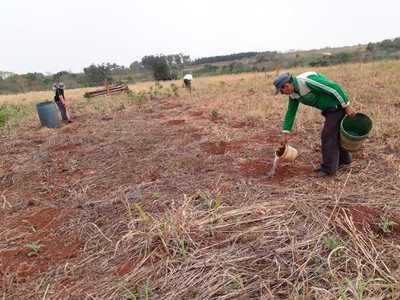 Labriegos aplican creativo sistema de riego para proteger sus cultivos