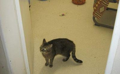 Joven denunció a su madrastra en la Fiscalía, por tirar a su gato a la calle