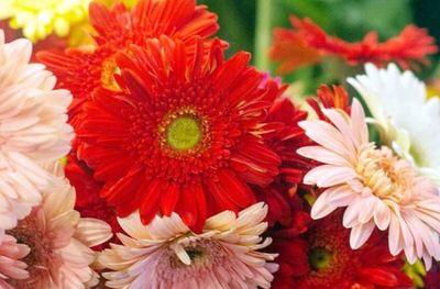 Feria de  flores, en  Shopping Mariscal