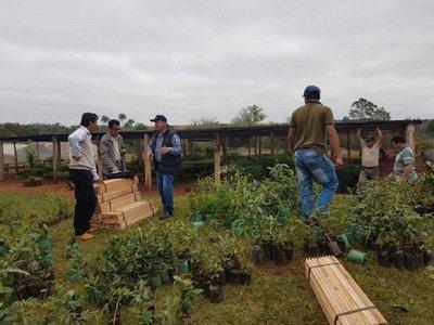 Plantatón 2019 adhiere a 25 municipios del Departamento de Itapúa