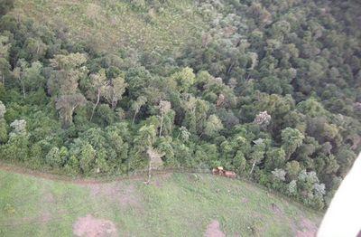 Itaipú dio a conocer los resultados de restauración forestal