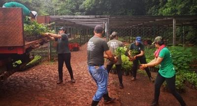 Vivero Forestal de ITAIPU está habilitado de lunes a viernes