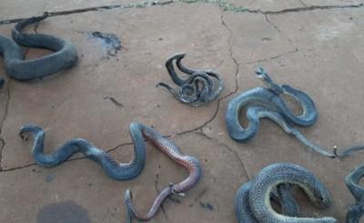 Varios animales muertos tras incendio en FIA-UNE