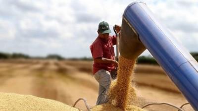 Los ingresos del complejo soja registraron una caída de 23,5%
