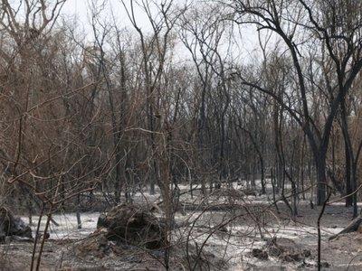 El fuego arrasó  6.000 hectáreas de    bosques ancestrales en Chovoreca