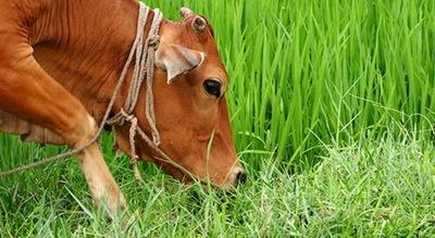 Socializan proyecto de prácticas sostenibles para soja y carne que mitiguen el cambio climático