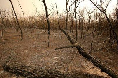 Incendios: 312.000 hectáreas afectadas en el Chaco paraguayo
