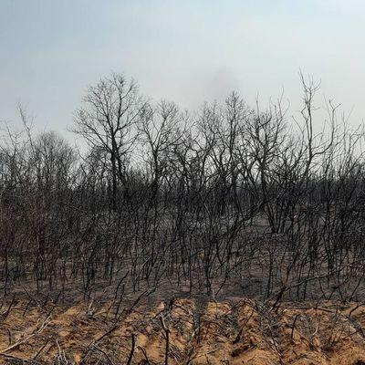 Más de 300.000 hectáreas afectadas por los incendios, solo en el Chaco
